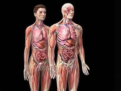 Anatomy Male Female 3d Models Zygote Poly