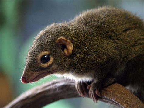 was fressen mäuse was fressen die spitzm 228 use ern 228 hrung und f 252 tterung