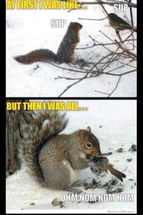 Crazy Bird Meme - squirrel meme 28 images evil squirrel meme memes squirrel memes squirrel meme www imgkid