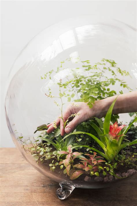 plantes pour terrarium conseils d experts d 233 tente jardin