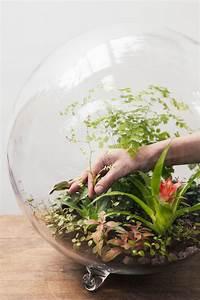 Terrarium Plante Deco : plantes pour terrarium conseils d 39 experts d tente jardin ~ Dode.kayakingforconservation.com Idées de Décoration