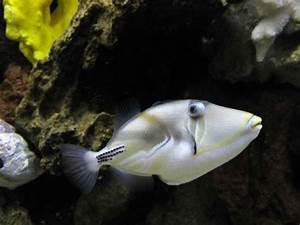 Fish - Pictures  Photos  U0026 Images Of Animals