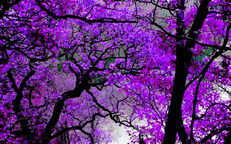 purple color wallpapers full hd