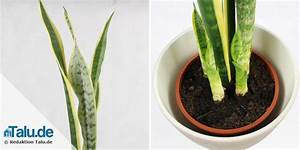 Pflanzen Wenig Licht : pflanzen im schlafzimmer 14 gesunde zimmerpflanzen ~ Markanthonyermac.com Haus und Dekorationen