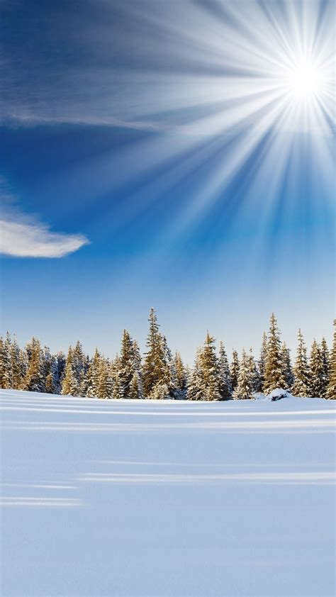 sunlight  forest snow field android wallpaper