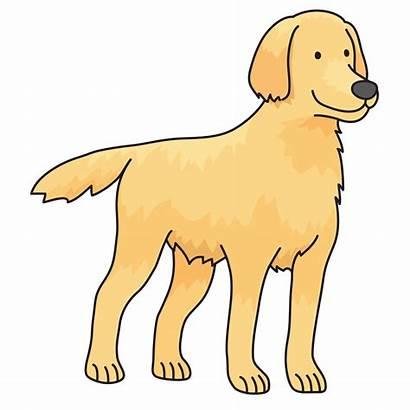 Retriever Dog Clip Clipart Labrador Golden Puppy
