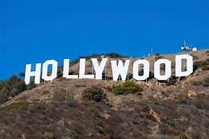 D Pet Hotels - D Pet Hotels Hollywood  Hollywood
