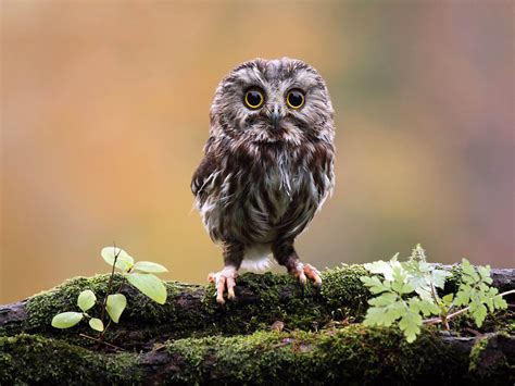 Owl Wallpaper by Wallpapers Owl