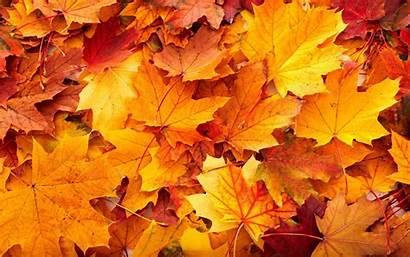 Leaves Desktop Autumn Fall Resolution Backgrounds Nature