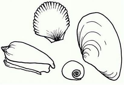Coloring Sea Seashells Shells Pages Types Shell