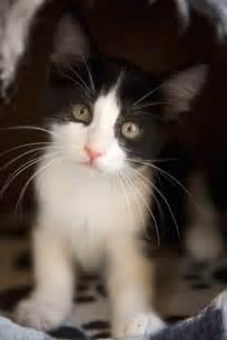 black cat white cat this just in