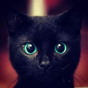 black cat with blue eyes | Cats | Pinterest | Funny cat ...
