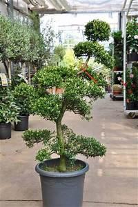 garten bonsai von der palmenmann auf blumende kaufen With whirlpool garten mit bonsai dünger