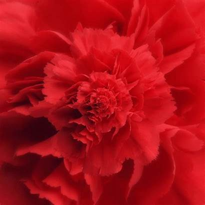 Abstract Gifs Animated Flowers Nature Flower Fractal