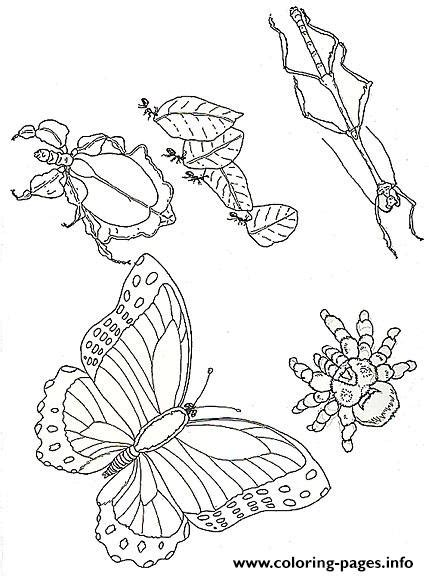 umbrella mural coloring insects  jan brett coloring pages printable
