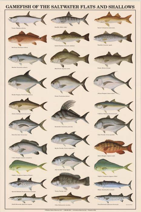 Saltwater Game Fish Identification