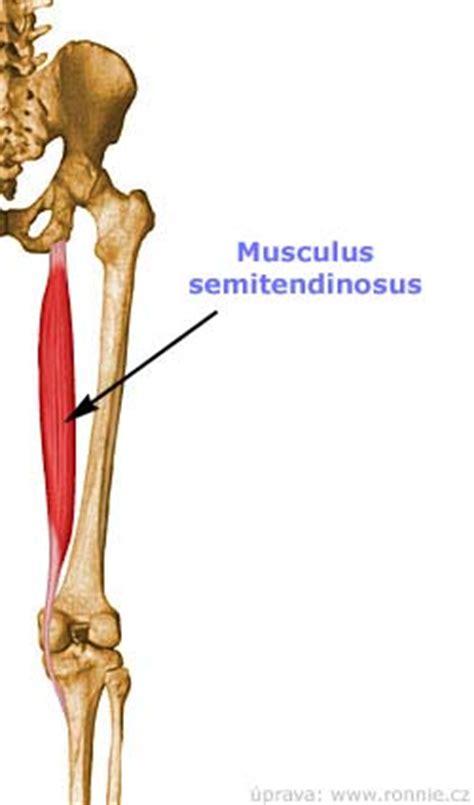 Zádové svaly bolest