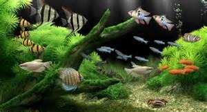 aquarium screensaver t 233 l 233 charger