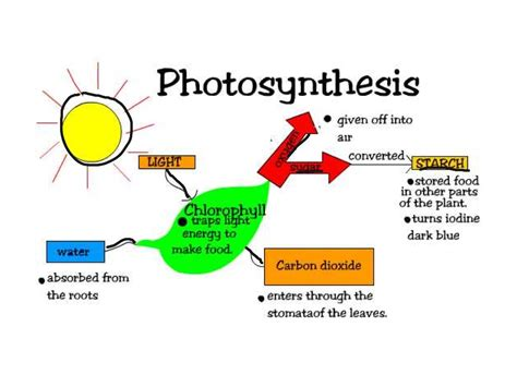 process of photosynthesis in a diagram gallery how to