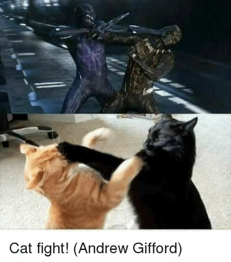 Cat Fight Meme - 25 best memes about fight fight memes