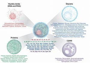 Elements Of Nucleic Acids Do 68 Molecules Hold The Key To Understanding Disease