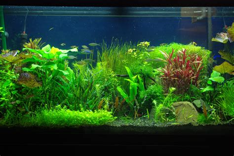 fish aquariums fish tank moving desktop backgrounds best looking