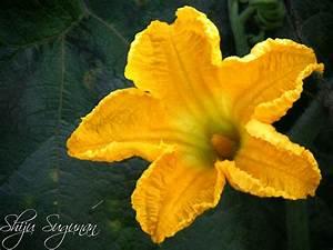 Cranium Bolts  Pumpkin Flower