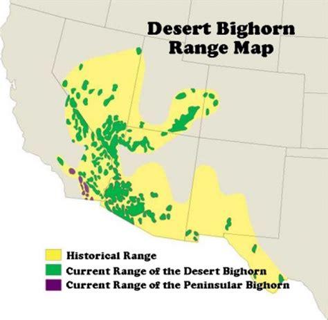 desert bighorn sheep where to see wildlife