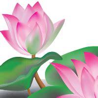 create  lotus flower  adobe illustrator cs