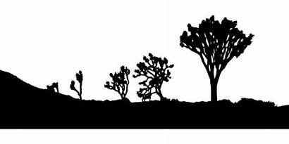 Silhouette Desert Landscape Clipart Joshua Trees Svg