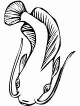 Catfish Coloring Pages Fish Printable Minecraft Template Realistic Adults Coloringpages101 Mycoloring sketch template