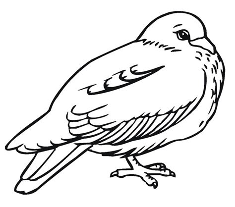 printable pigeon coloring pages  kids