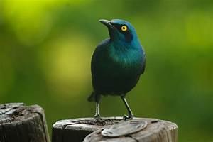 Oiseau Jaune Et Bleu : calendrier oiseaux leave live love ~ Melissatoandfro.com Idées de Décoration