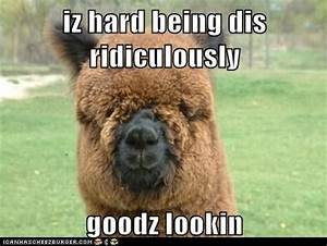 9 best Alpaca Jokes images on Pinterest | Funny stuff, Too ...