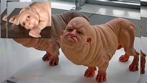 Human Chimera Baby