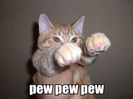 funny quotes  cats  dogs fighting quotesgram