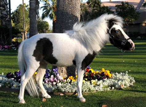 einstein horse tiniest grown turned lovers