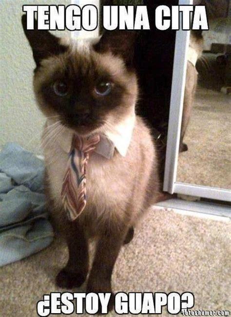 Memes De Gatos - imagenes y fotos de caidas graciosas 1 fotos de humor auto design tech