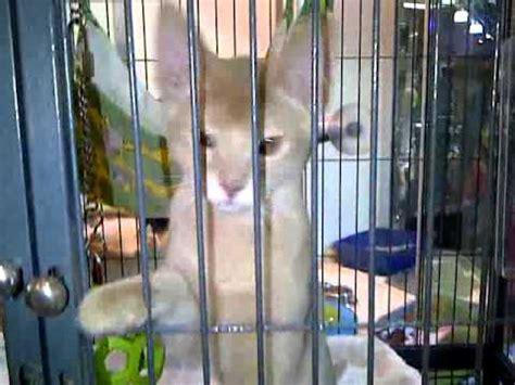 gardens pet store pj s pet store sherway gardens kittens for sale illegally youtube