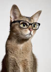 clever cat smart cat desktop backgrounds