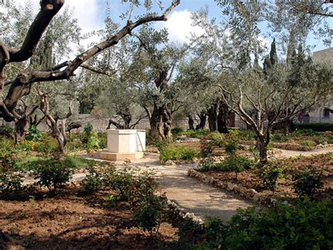 Garden Of Gethsemane Bible by Bible Land Tour Led By Ferrell Jenkins April 26 May 7
