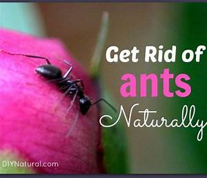 How to get rid of ants in bedroom 28 images 93 how to for How to get rid of ants in your bathroom
