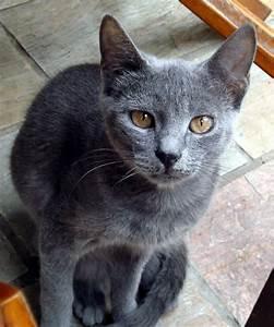 Crete Cats - Cute Grey Cat | Grey cat in Crete | AlmazUK ...
