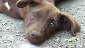 Orphan Dog Puppy with green eyes Native breed of India ...
