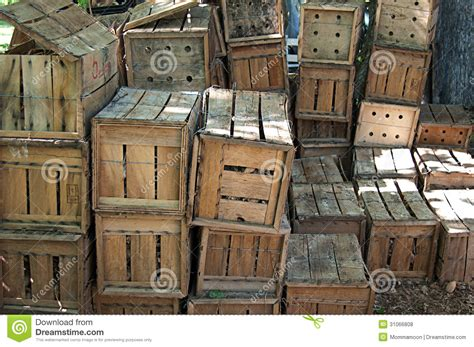 wooden crates filled  flower bulbs royalty  stock