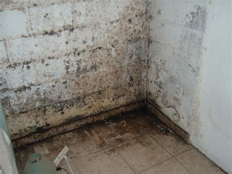 probleme d humidite mur interieur des solutions efficaces et durables pour traiter l humidit 233 batirenover