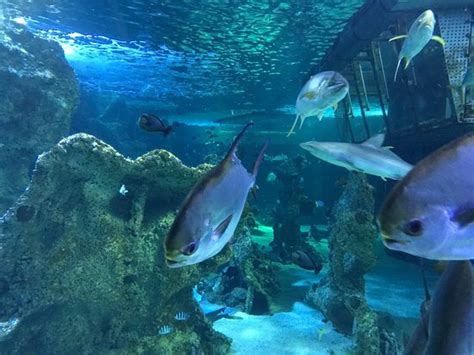 aquarium sea sea sydney aquarium picture of sea sydney aquarium sydney tripadvisor