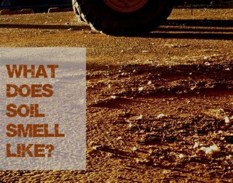 dirt  soil smell    smell
