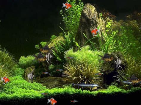 fond ecran aquarium anime aquarium animated wallpaper free and review