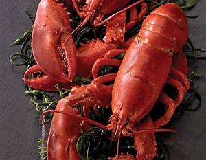 New England Lobster in Shell | Delivered | Legal Seafoods